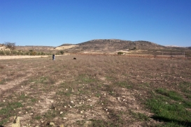 Plot for sale - Property for sale - Pinoso - Pinoso