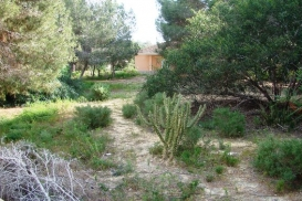 Plot for sale - Property for sale - Algorfa - Montemar