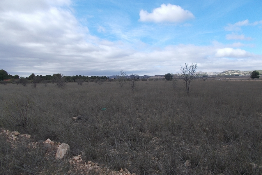 Property Sold - Plot for sale - Yecla