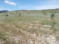 Plot of land for sale - Plot for sale - Pinoso