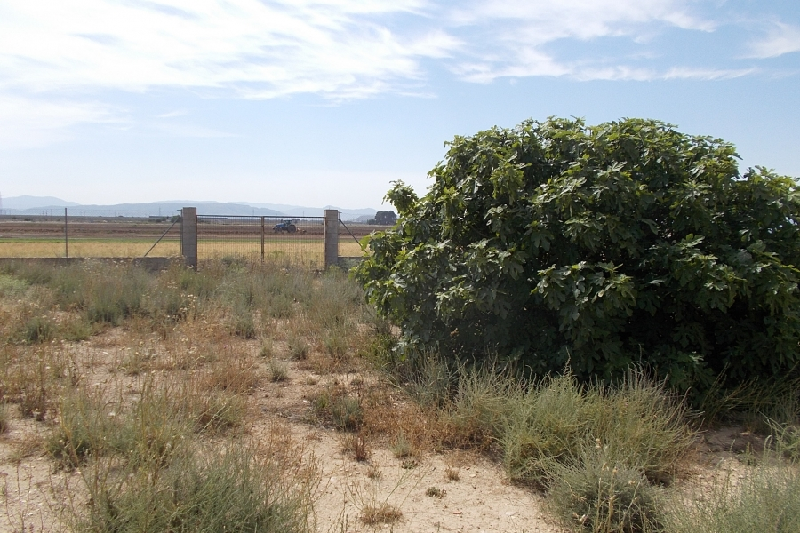 Property Sold - Finca for sale - Caudete
