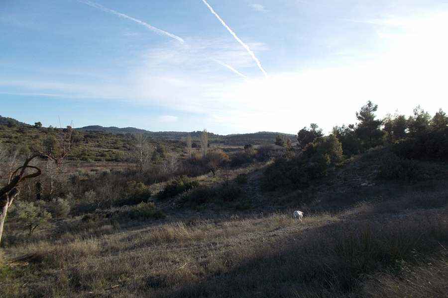Property for sale - Finca for sale - Almansa