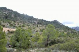 Plot for sale - Plot of land for sale - Hondon de las Frailes - Hondon de Las Frailes